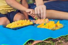 Mamman och sonen hade en picknick i parkera Äta sunda frukter - mango, ananas och melon Barn äter sund mat arkivfoton
