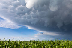 Mammatus clouds above a green grass.  Royalty Free Stock Photography