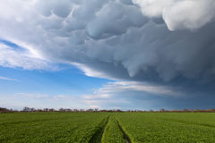 Mammatus clouds above a green grass Stock Photo