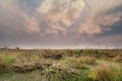 Mammatus clouds over swamp at sunset Stock Images
