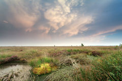 Mammatus clouds over swamp at sunset Royalty Free Stock Image