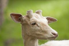 Mammifères de forêt photographie stock libre de droits