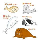 Mammifères marins arctiques avec des noms Image de couleur de bande dessinée de vecteur Photos stock