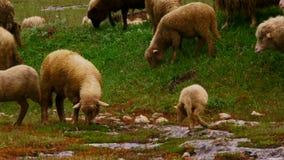 mammiferi stock footage