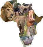Mammiferi selvatici africani in un collage dell'Africa Immagini Stock