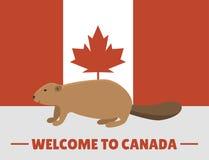 Mammifero animale del carattere del castoro di Brown sull'illustrazione canadese di vettore del fondo rosso della bandiera bianca royalty illustrazione gratis