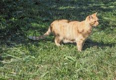 Mammifero del gatto fotografia stock