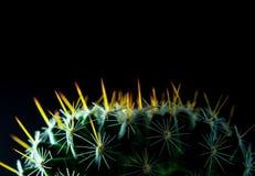Mammillaria d'espèces de cactus sur le fond noir Photographie stock