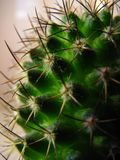 Mammilyaria kaktus w górę zdjęcia stock