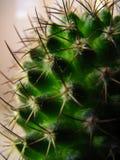 Mammilyaria kaktusnärbild arkivfoton