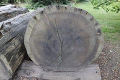 Mammon tree Royalty Free Stock Image