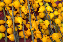 Mammosum do Solanum Fundo amarelo Fotografia de Stock