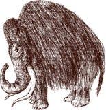 Mammoth Stock Photo