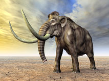 Mammoth Royalty Free Stock Image