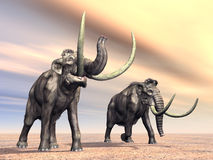 Mammoth Stock Image