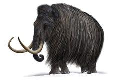 mammoth Imagens de Stock