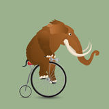 Mammoth on a bicycle Stock Image