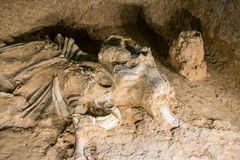 Mammoth Bones Royalty Free Stock Photo
