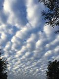 Mammoth clouds #2. Morning clouds with a bit of leafy nature on the side Royalty Free Stock Image