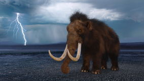 Mammoth Royalty Free Stock Photo