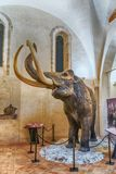 Mammoth featured in exhibition held in Gubbio, Italy Royalty Free Stock Images