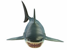 Mammoth Great White Shark Royalty Free Stock Photography