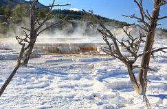 The Mammoth Hot Spring area in Yellowstone Stock Images