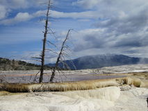 Mammoth hot spring Stock Photos
