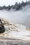 Mammoth Hot Spring Terraces Royalty Free Stock Photo