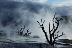 Mammoth hot spring in Yellowstone Royalty Free Stock Photos