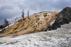 Mammoth hot spring yellowstone national park Stock Image