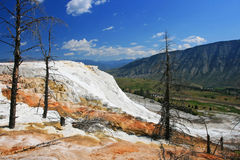 Mammoth Hot Spring at Yellowstone National Park Stock Image