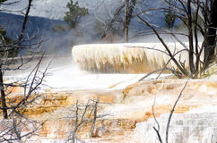 Mammoth Hot Springs 库存照片