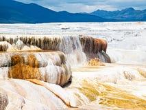 Mammoth Hot Springs -黄石NP 库存图片