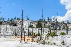 Mammoth Hot Springs Стоковое фото RF