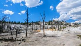Mammoth Hot Springs Стоковая Фотография