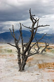 Mammoth Hot Springs Stockfoto