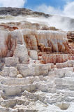 Mammoth Hot Springs Stock Image