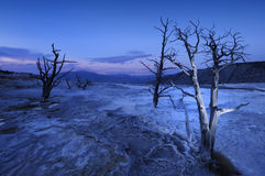 Free Mammoth Hot Springs Stock Images - 21045024