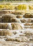 Mammoth Hot Springs. Travertine terraces at Mammoth Hot Springs, Yellowstone National Park, Wyoming, USA stock image