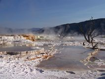 Mammoth Hot Springs Foto de Stock