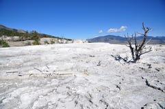 Mammoth Hot Springs Arkivfoton
