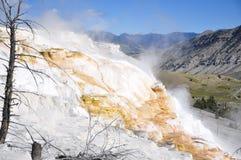 Mammoth Hot Springs Arkivbilder