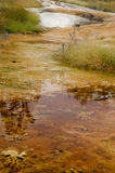 Mammoth Hot Springs Imagem de Stock