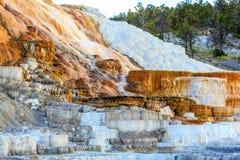 Mammoth Hot Springs Immagine Stock Libera da Diritti
