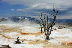Mammoth Hot Springs Stockbilder