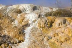 Mammoth Hot Springs 免版税库存照片