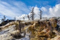 Mammoth Hot Springs 免版税图库摄影