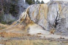 Mammoth Hot Springs Стоковое Изображение