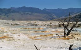 Mammoth Hot Springs Fotografía de archivo libre de regalías
